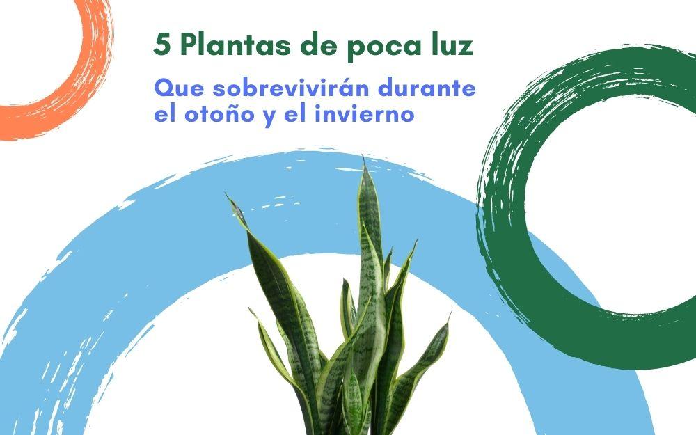 rePlanto Header Blog 5 Plantas de poca luz